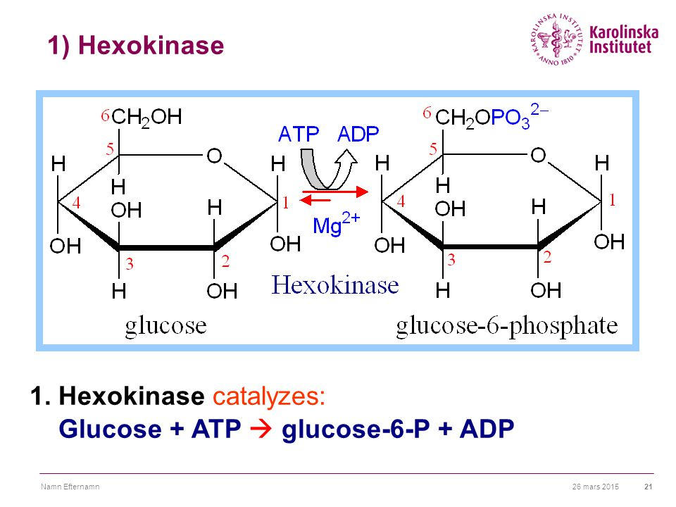 1. Hexokinase catalyzes: Glucose + ATP  glucose-6-P + ADP