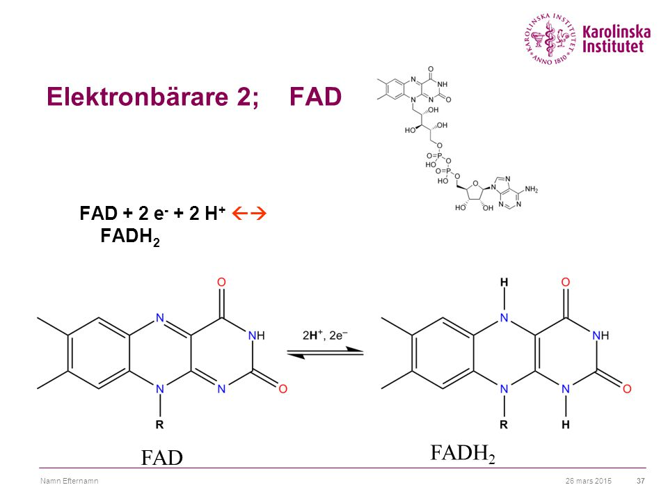 Elektronbärare 2; FAD FADH2 FAD FAD + 2 e- + 2 H+  FADH2