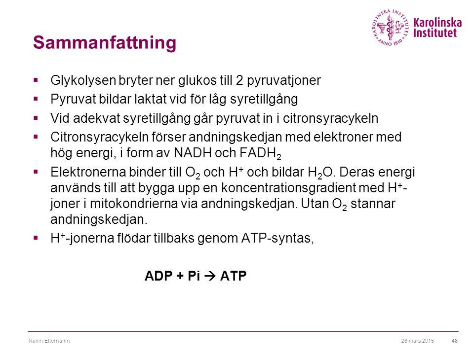 Sammanfattning Glykolysen bryter ner glukos till 2 pyruvatjoner