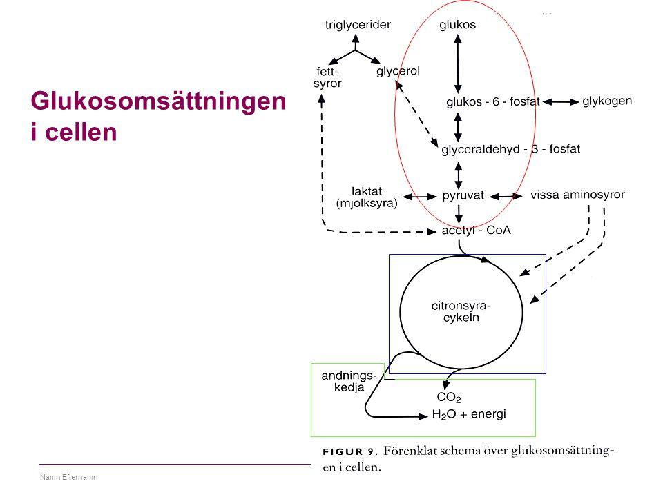 Glukosomsättningen i cellen