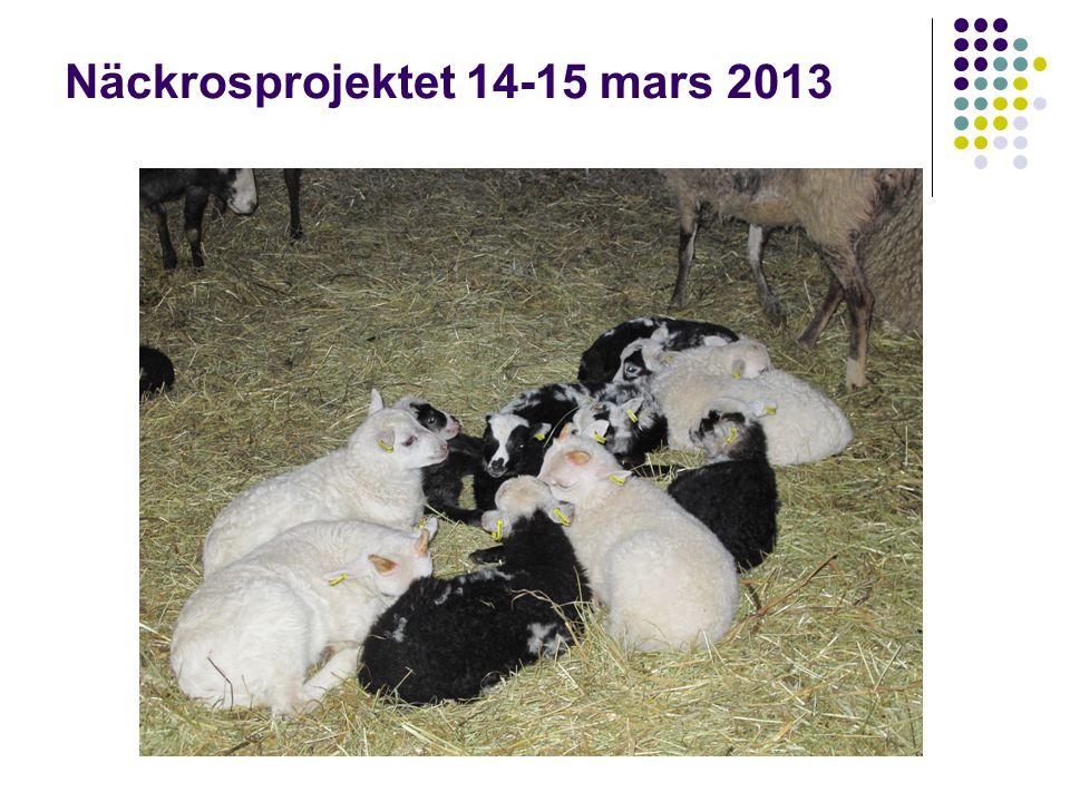 Näckrosprojektet 14-15 mars 2013