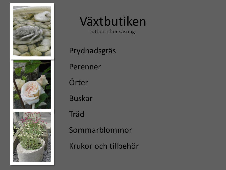 Växtbutiken Prydnadsgräs Perenner Örter Buskar Träd Sommarblommor