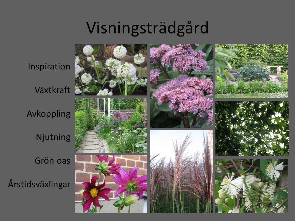 Visningsträdgård Inspiration Växtkraft Avkoppling Njutning Grön oas