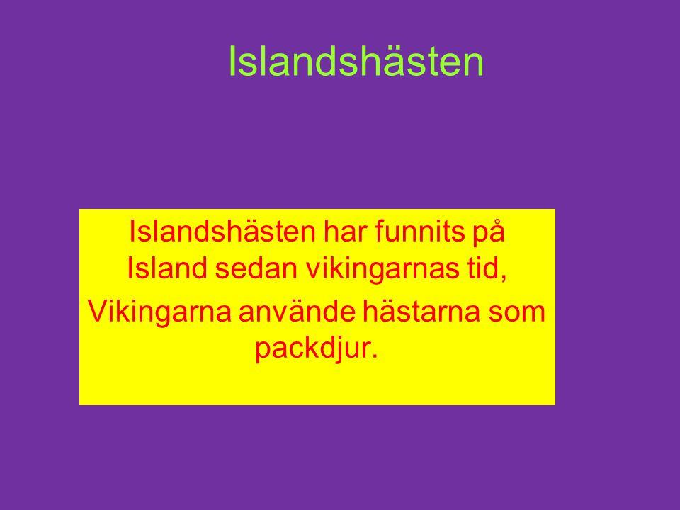 Islandshästen Islandshästen har funnits på Island sedan vikingarnas tid, Vikingarna använde hästarna som packdjur.