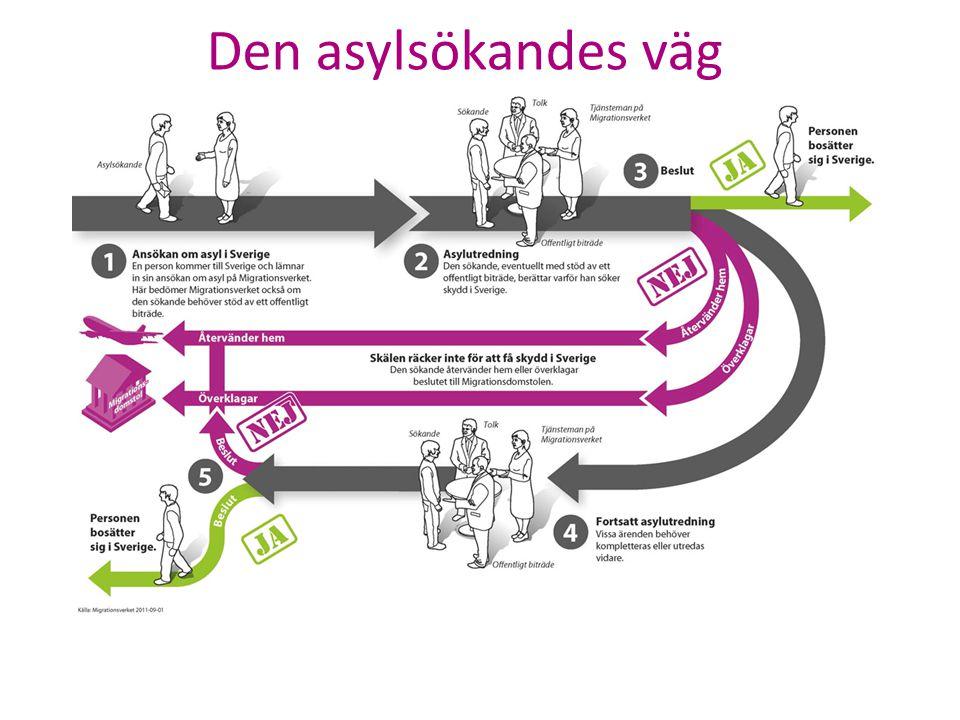 Den asylsökandes väg 1. En person ansöker om asyl hos Migrationsverket som prövar ansökan.