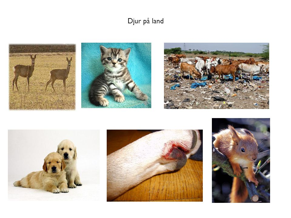 Djur på land