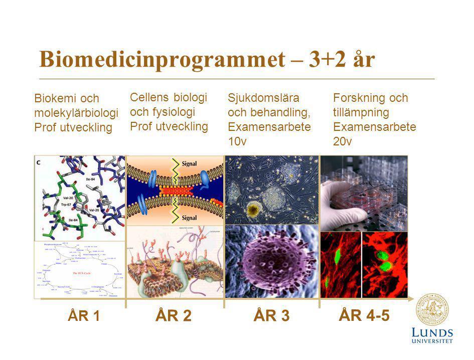 Biomedicinprogrammet – 3+2 år