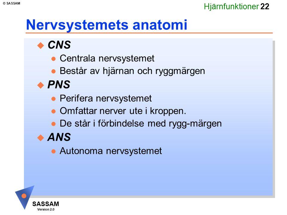 Nervsystemets anatomi