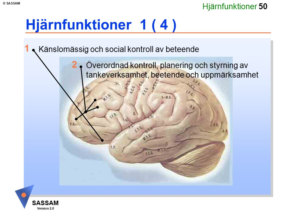 Hjärnfunktioner 1 ( 4 ) 1. Känslomässig och social kontroll av beteende. 2.