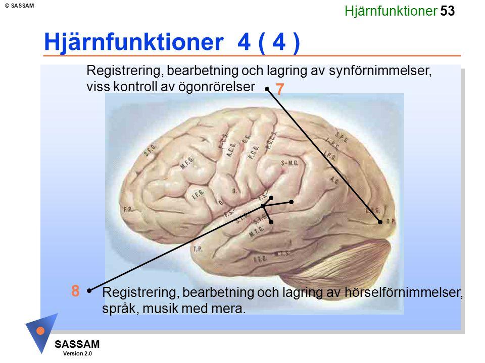 Hjärnfunktioner 4 ( 4 ) Registrering, bearbetning och lagring av synförnimmelser, viss kontroll av ögonrörelser.