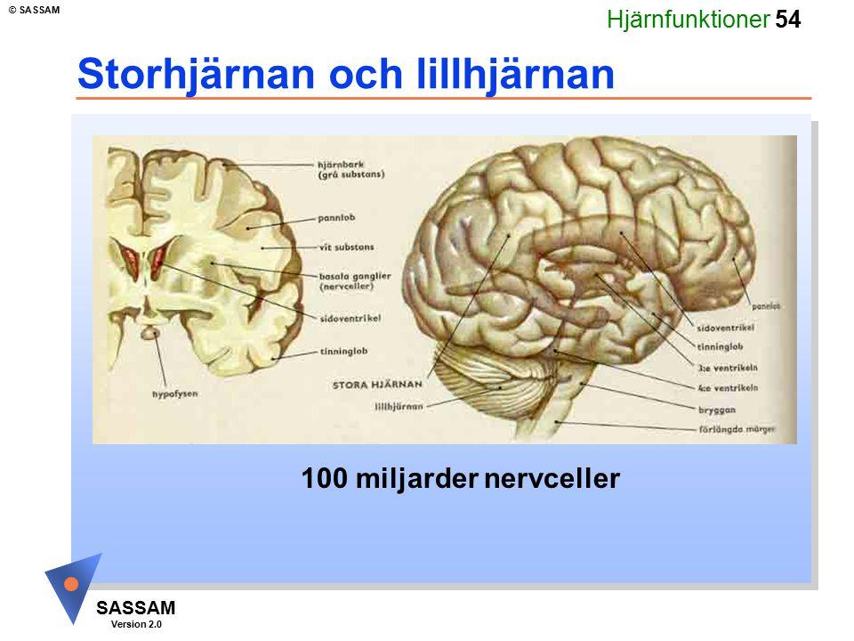 Storhjärnan och lillhjärnan
