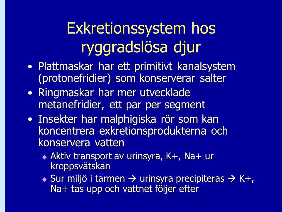 Exkretionssystem hos ryggradslösa djur