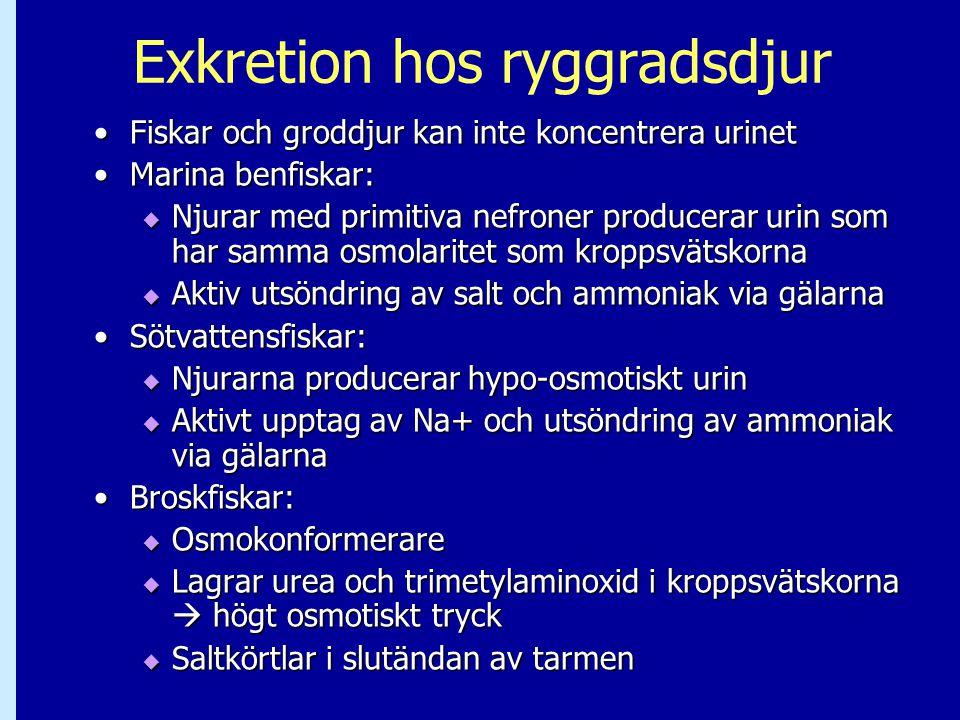 Exkretion hos ryggradsdjur