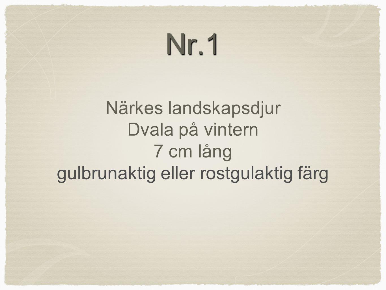 Nr.1 Närkes landskapsdjur Dvala på vintern 7 cm lång gulbrunaktig eller rostgulaktig färg