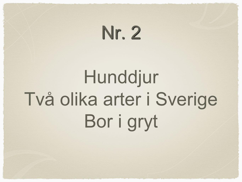 Nr. 2 Hunddjur Två olika arter i Sverige Bor i gryt
