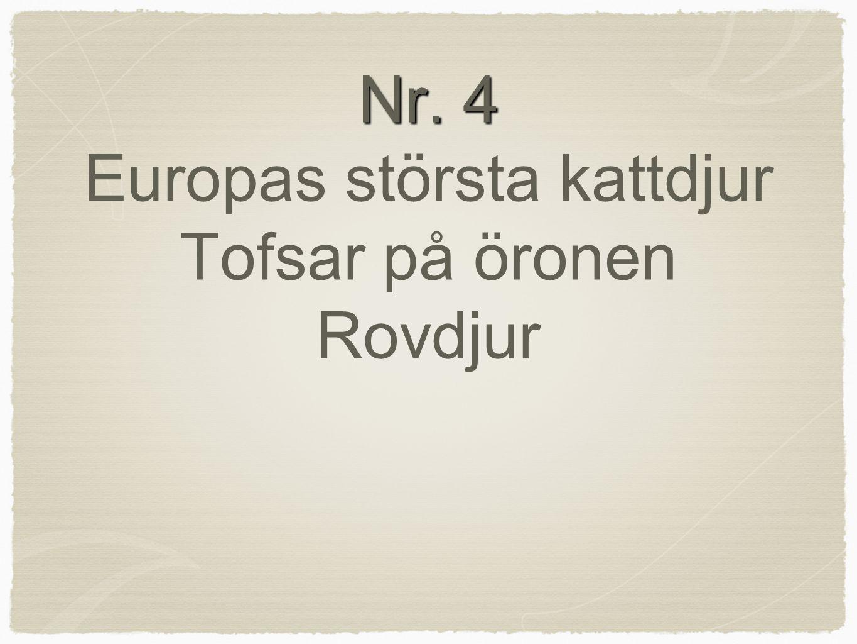 Nr. 4 Europas största kattdjur Tofsar på öronen Rovdjur