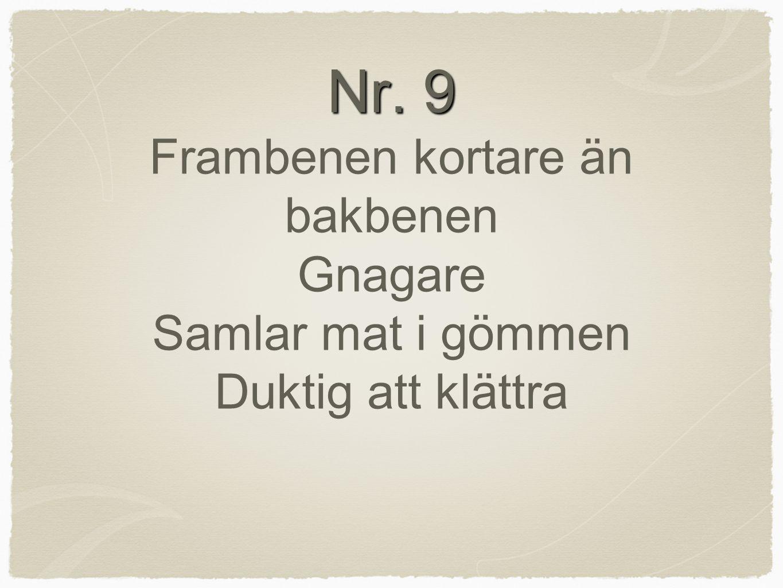 Nr. 9 Frambenen kortare än bakbenen Gnagare Samlar mat i gömmen Duktig att klättra