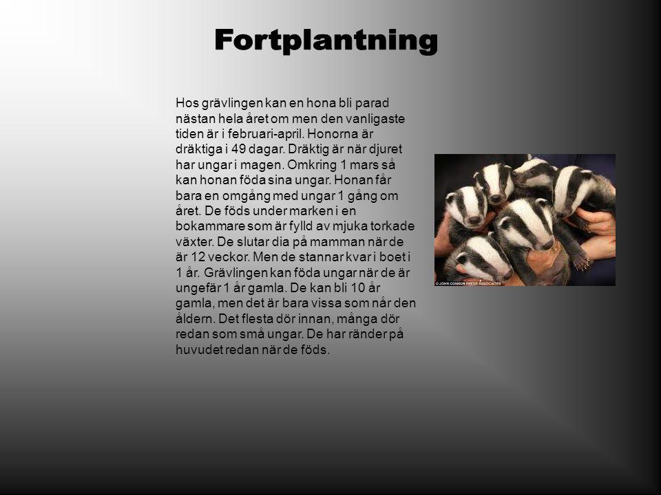 Fortplantning
