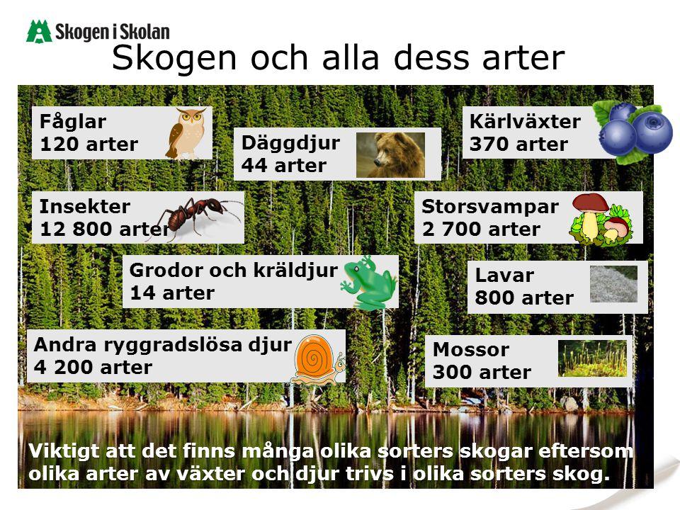 Skogen och alla dess arter