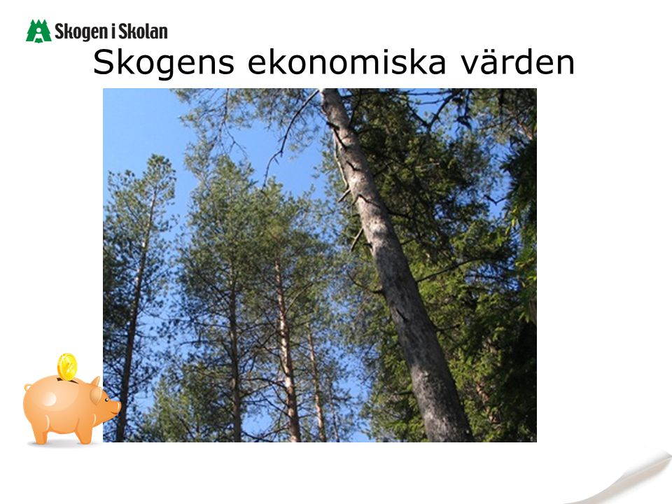 Skogens ekonomiska värden