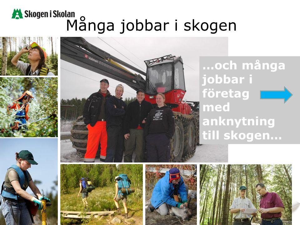 Många jobbar i skogen …och många jobbar i företag med anknytning till skogen…