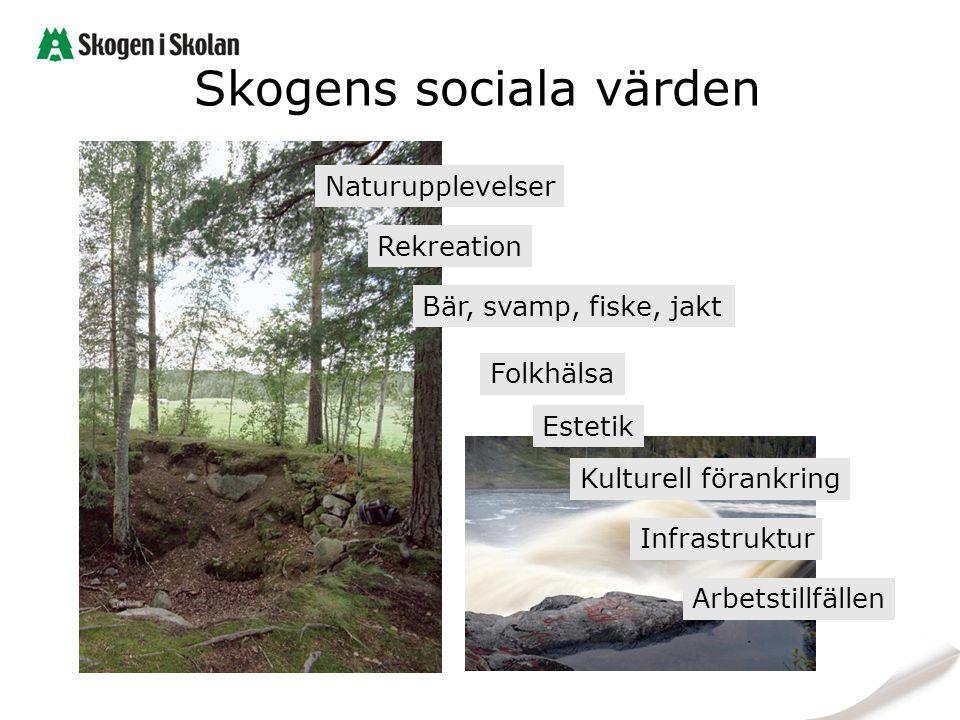 Skogens sociala värden