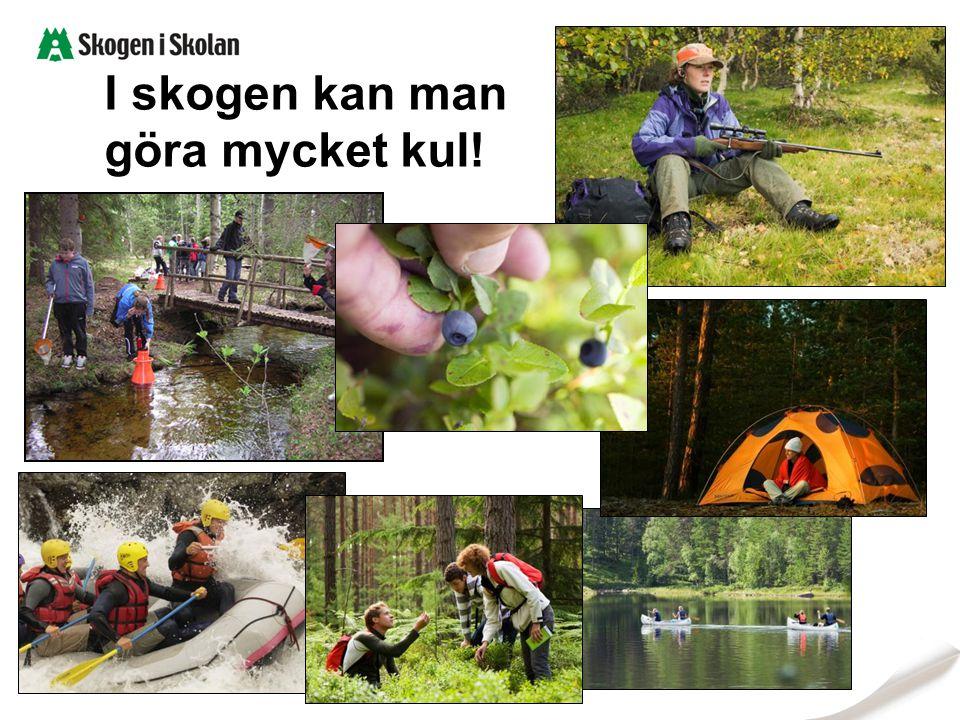 I skogen kan man göra mycket kul! Bilder: Sveaskog, Skogen i Skolan