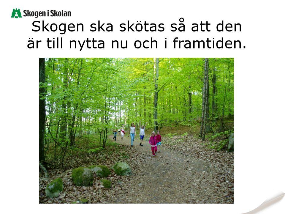 Skogen ska skötas så att den är till nytta nu och i framtiden.