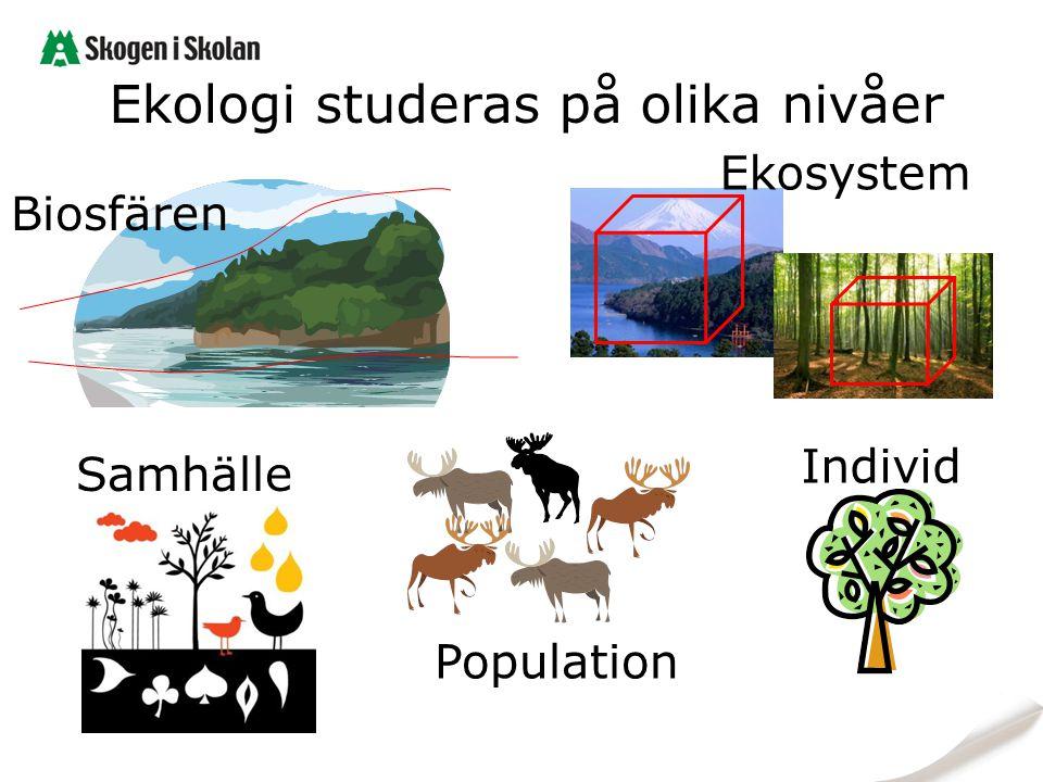 Ekologi studeras på olika nivåer
