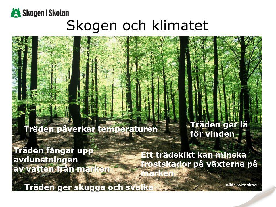 Skogen och klimatet Träden ger lä för vinden