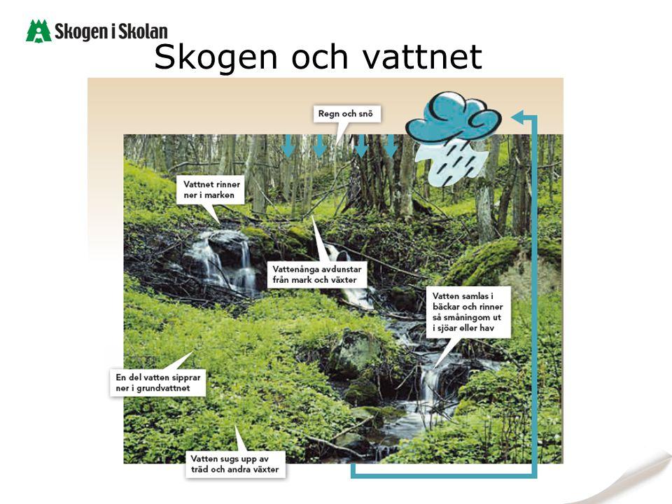 Skogen och vattnet