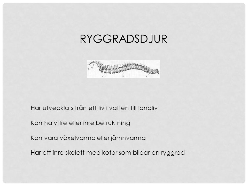 RYGGRADSDJUR Har utvecklats från ett liv i vatten till landliv