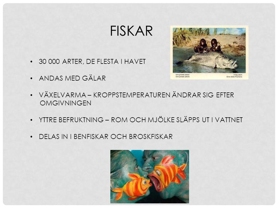FISKAR 30 000 ARTER, DE FLESTA I HAVET ANDAS MED GÄLAR