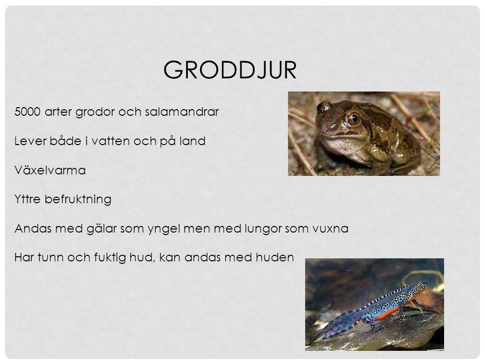 GRODDJUR 5000 arter grodor och salamandrar