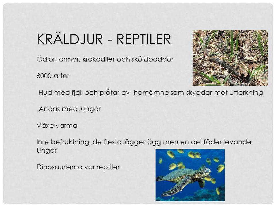 KRÄLDJUR - REPTILER Ödlor, ormar, krokodiler och sköldpaddor