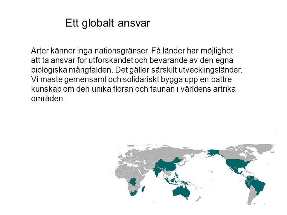 Ett globalt ansvar
