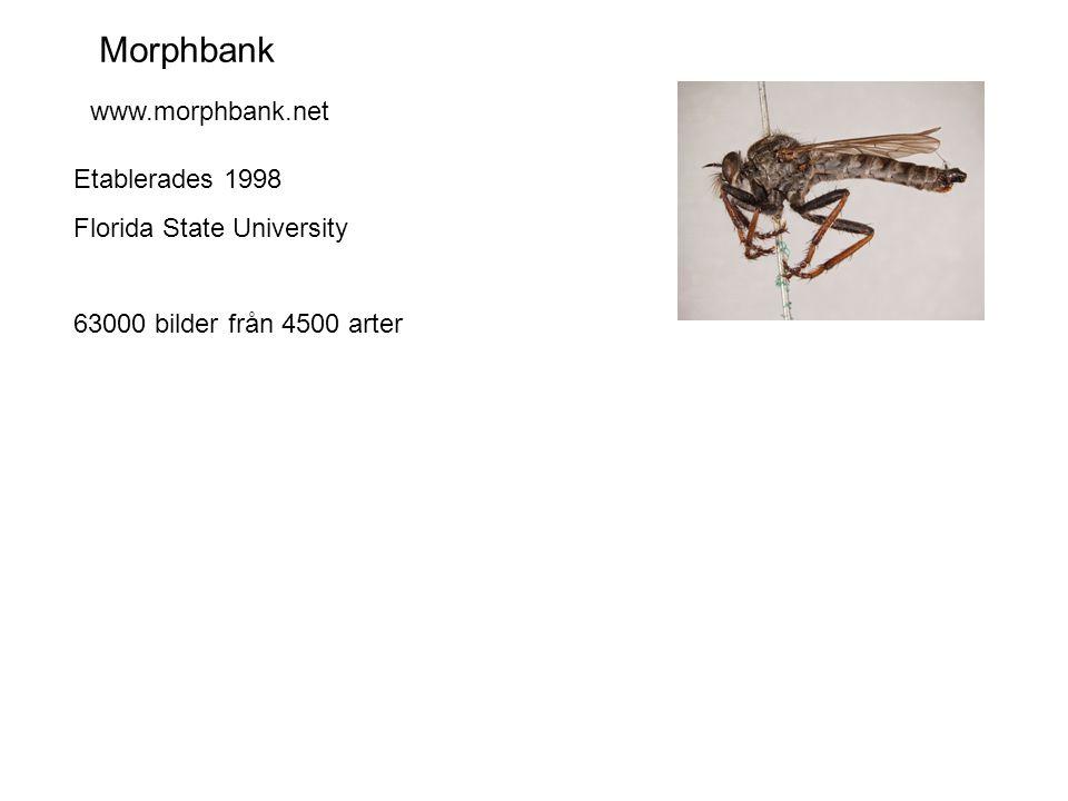 Morphbank www.morphbank.net Etablerades 1998 Florida State University