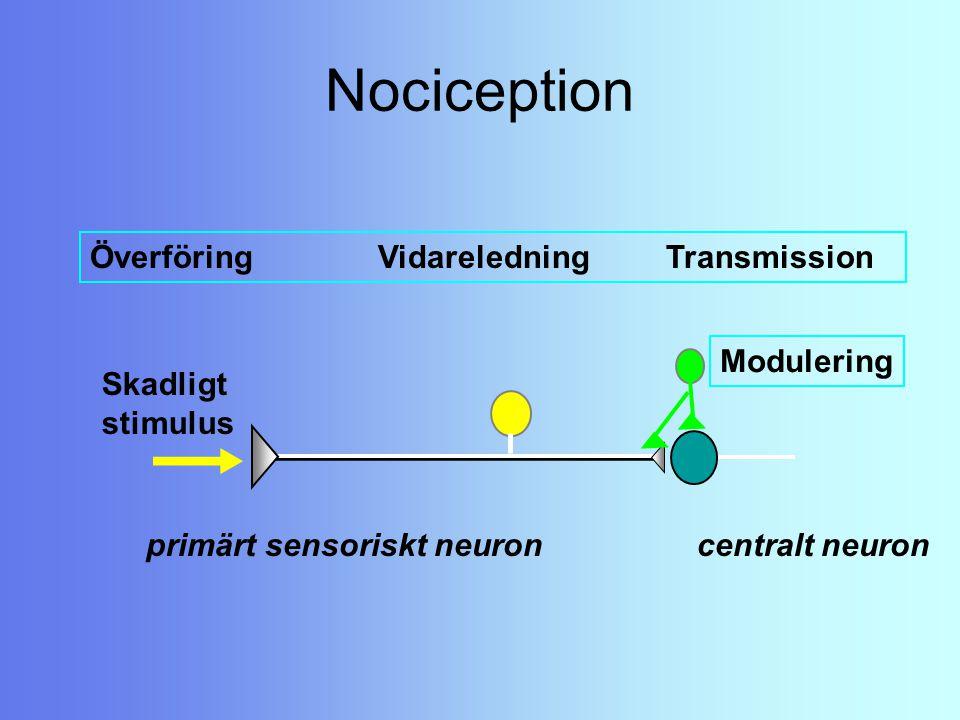 Nociception Överföring Vidareledning Transmission Modulering Skadligt