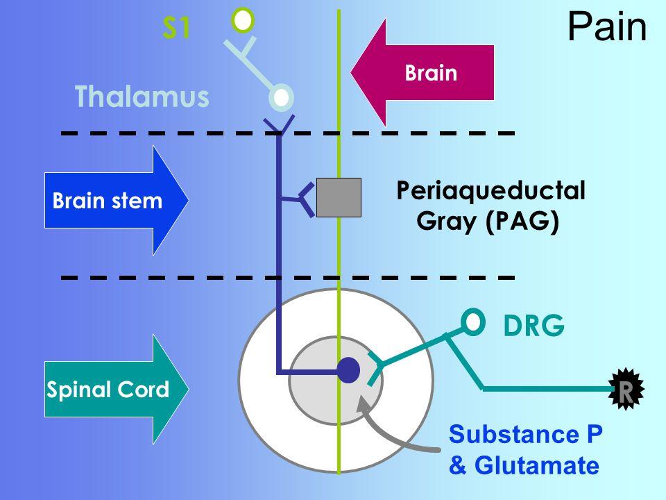 Pain S1 Thalamus DRG R Periaqueductal Gray (PAG) Substance P