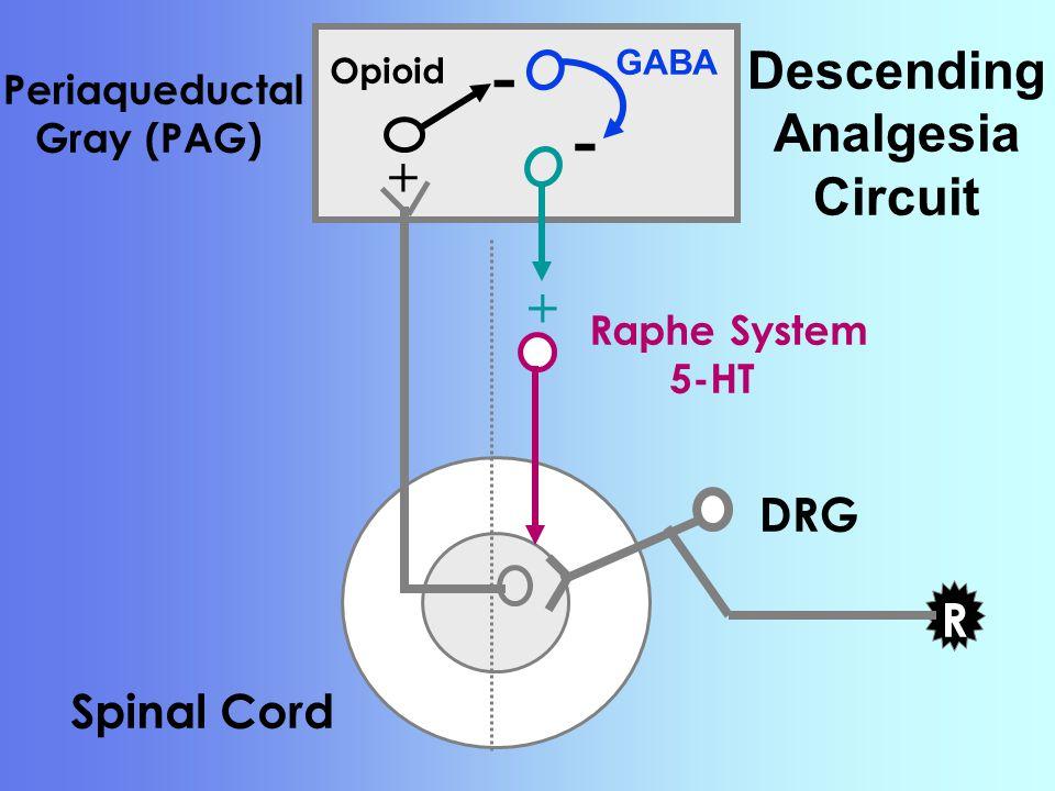 Descending Analgesia Circuit