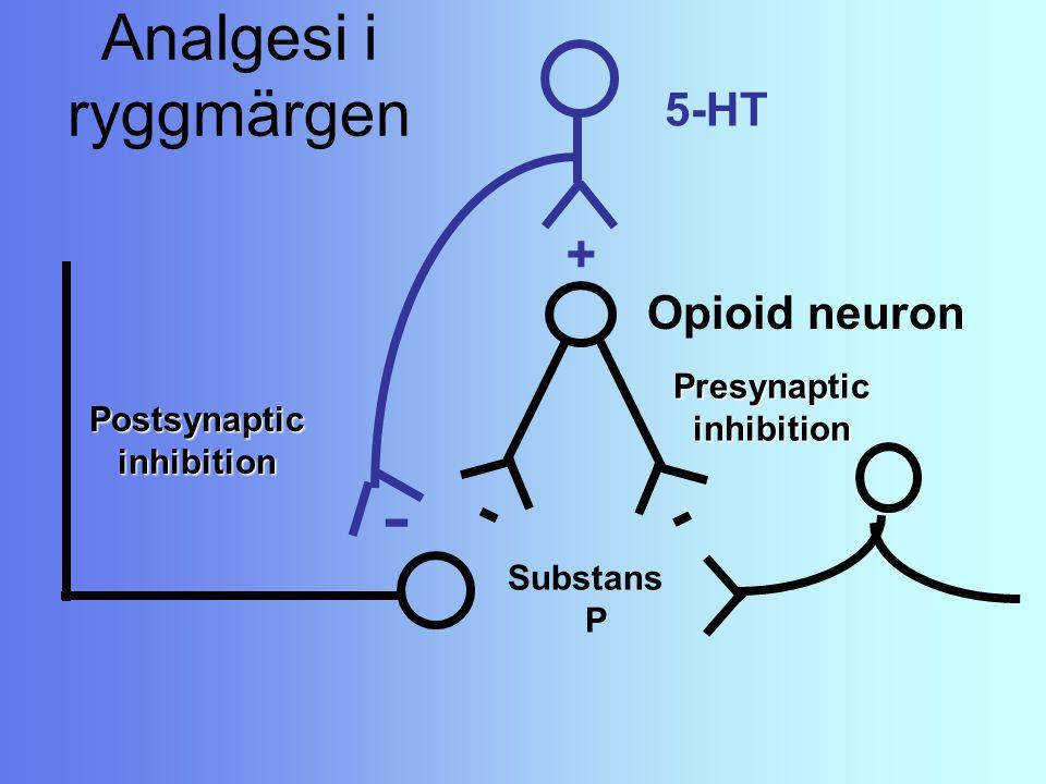 - Analgesi i ryggmärgen - + 5-HT Opioid neuron Presynaptic inhibition