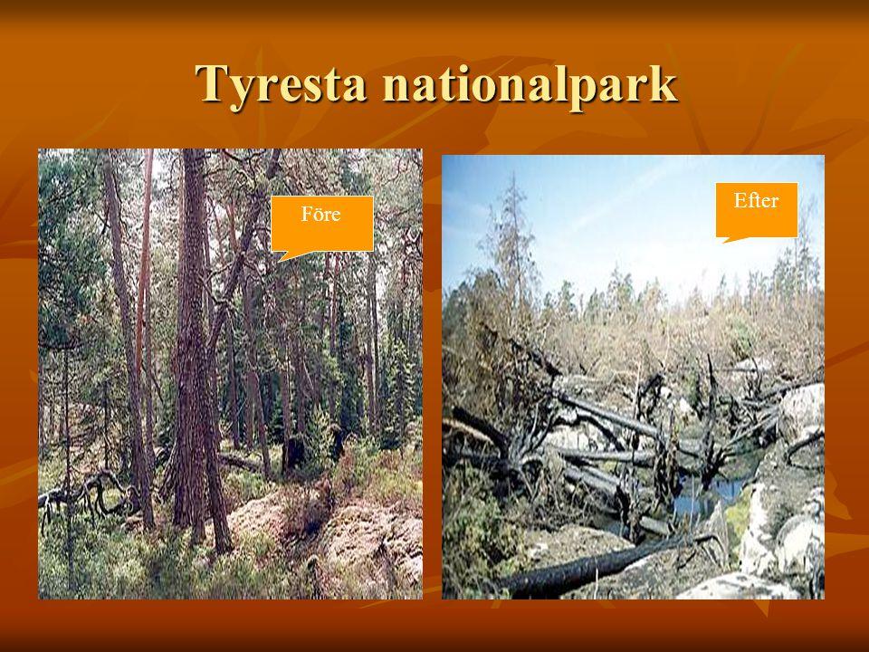 Tyresta nationalpark Efter Före
