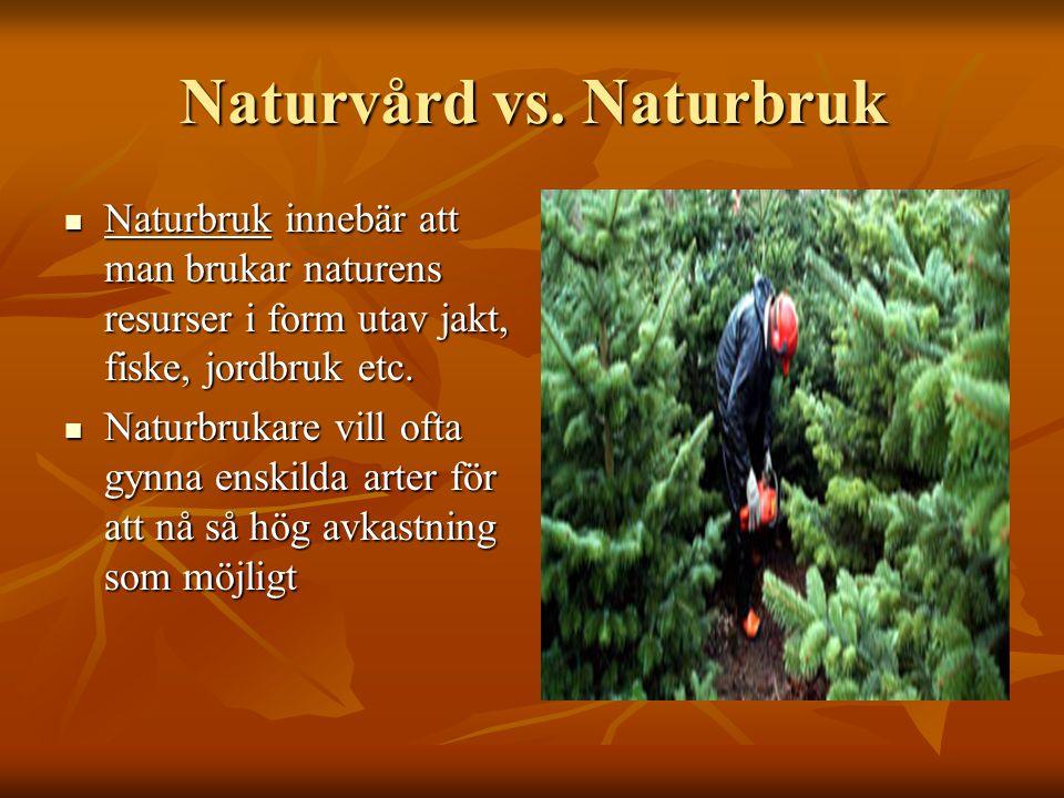 Naturvård vs. Naturbruk