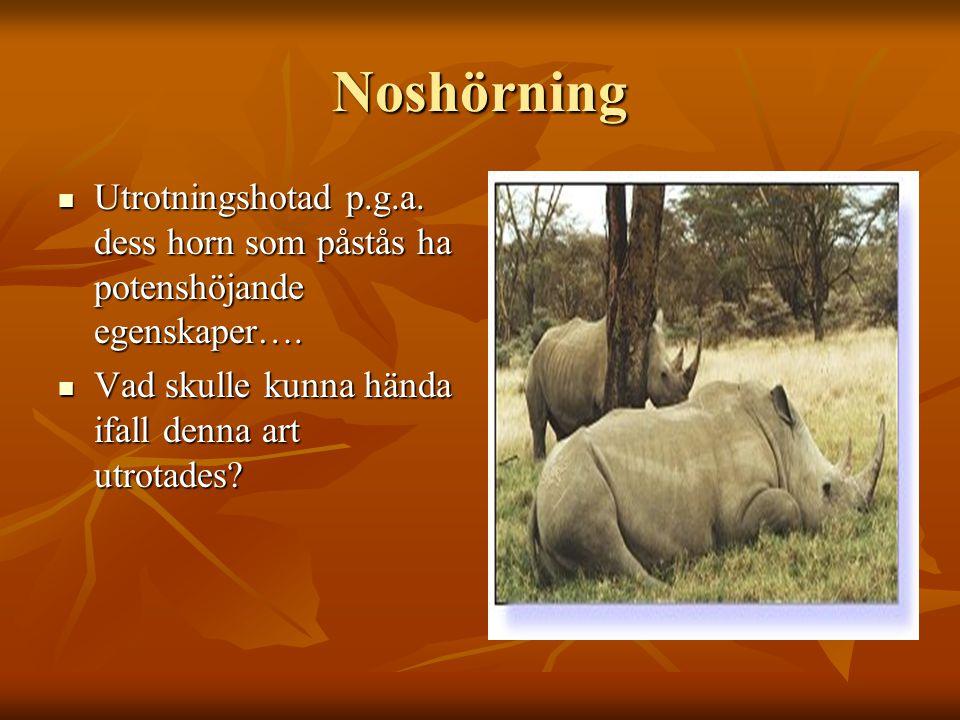 Noshörning Utrotningshotad p.g.a. dess horn som påstås ha potenshöjande egenskaper….