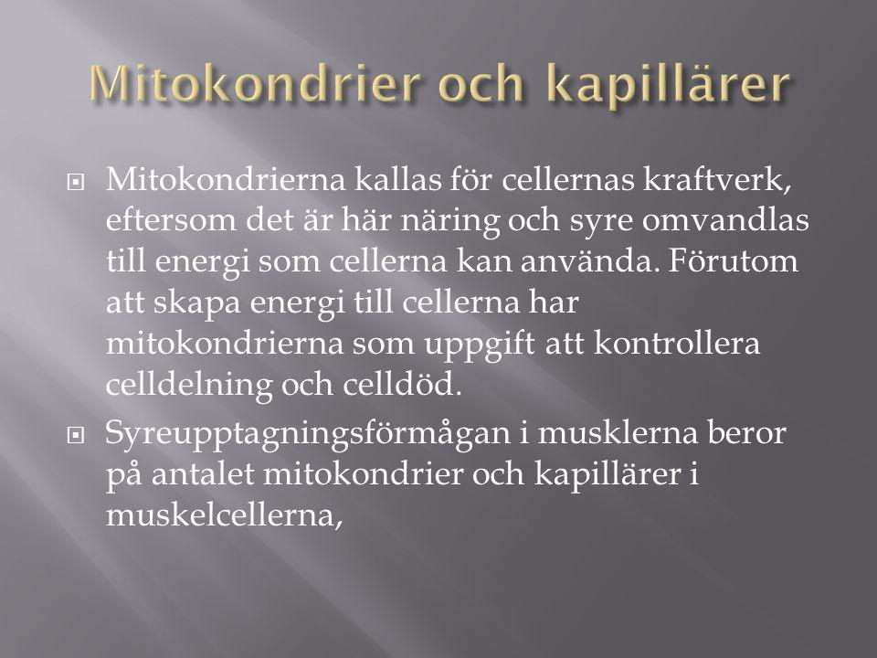 Mitokondrier och kapillärer