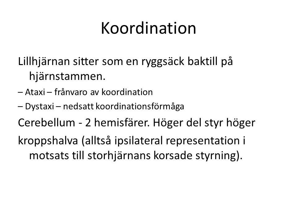 Koordination Lillhjärnan sitter som en ryggsäck baktill på hjärnstammen. – Ataxi – frånvaro av koordination.
