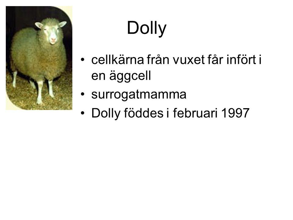 Dolly cellkärna från vuxet får infört i en äggcell surrogatmamma