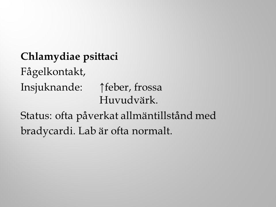 Chlamydiae psittaci Fågelkontakt, Insjuknande: ↑feber, frossa Huvudvärk.