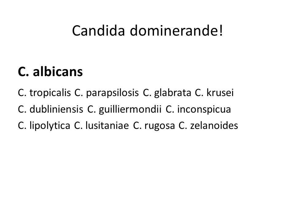 Candida dominerande! C. albicans