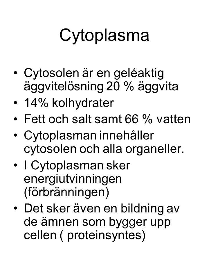 Cytoplasma Cytosolen är en geléaktig äggvitelösning 20 % äggvita